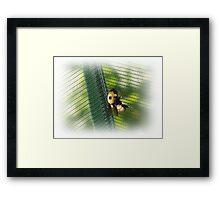 Huge Bee Framed Print