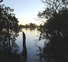 Manning Mangrove by Graham Mewburn