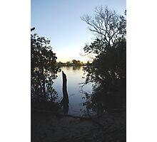 Manning Mangrove Photographic Print