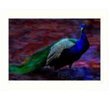 Peacock's Pride  Art Print