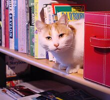 Bookworm kitty by Susan Vogel-Misicka