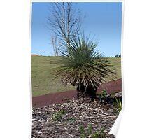 Grass Tree, Ellenbrook, Western Australia Poster