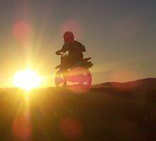 Afternoon Buzz by speedyhorse8