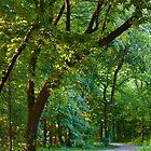 Winding Path by SBrown