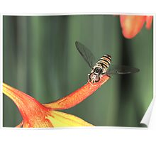 hoverfly #4 Poster