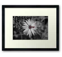 Bringing life to the darkness Framed Print