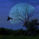 Moonlit Summer Night by Brian Dodd