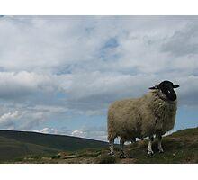 Peak Sheep Photographic Print