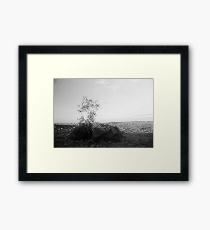 Reaching for the new day... Framed Print