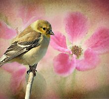 Winter Goldfinch/Summer Roses by Bonnie T.  Barry