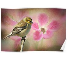 Winter Goldfinch/Summer Roses Poster