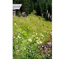 Alpine Pasture Photographic Print