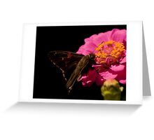 Furry Butterfly on Coneflower Greeting Card