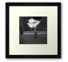 Knock, knock!  Who's there? Framed Print
