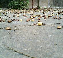 Neem Fruit by Sunil Joe Balu & Vijay Moses