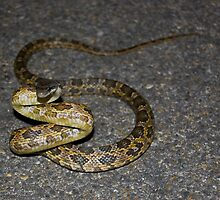 Why did the snake cross the road? by Roschetzky