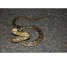 Why did the snake cross the road? Photographic Print