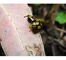 Ladybird Liftoff Photographic Print