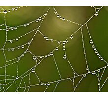 Dew drops on web Photographic Print