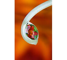 Lily magnifier  Photographic Print