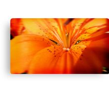 Lilly ( Living Motion )  Canvas Print