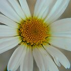 Daisy Face by MaeBelle