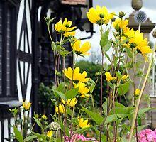 English Country Garden by Elizabeth L Taylor