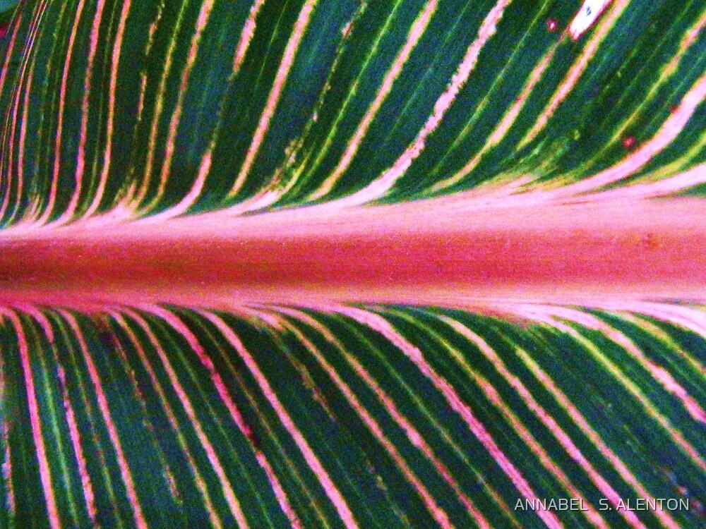 canna lily leaf by ANNABEL   S. ALENTON
