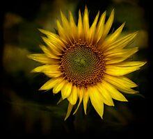 sunflower by jipihope