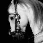Stallion by Heather Last