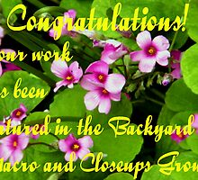 Backyard Banner by R&PChristianDesign &Photography