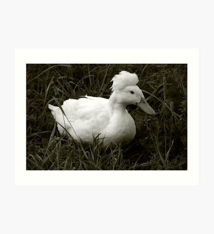 Crestie the Crested Duck Art Print