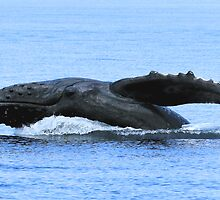 Baby Is Showing Off by Gina Ruttle  (Whalegeek)