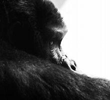 Gorilla! by Wayne Gerard Trotman