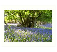 Bluebell Woods II Art Print