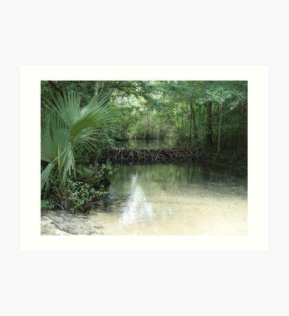 Beaver Dam and Pond on Econfina Creek Art Print