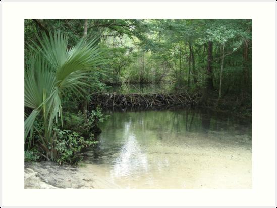 Beaver Dam and Pond on Econfina Creek by May Lattanzio