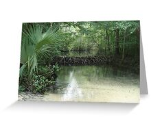 Beaver Dam and Pond on Econfina Creek Greeting Card