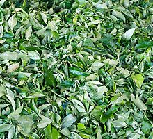 Tea leaves drying in the sun by stuwdamdorp