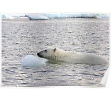 Polar Bear Dip Poster