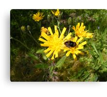 Insect on a Dandelion Canvas Print