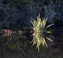 Lake Hanlon reflection by Charles Kosina