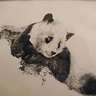 Panda by Dave  Butcher
