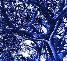 Vibrant Blue: Complex Branches Frame the Sky  by Ivana Redwine
