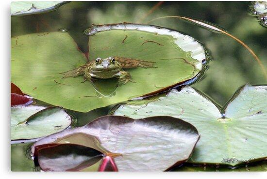 Frogger by MDossat