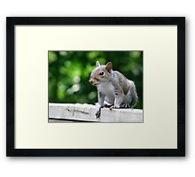 Trouble on the Deck Framed Print