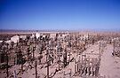Atacama graveyard by Syd Winer
