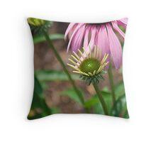 Coneflower (Echinacea purpurea) Throw Pillow