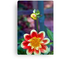 Dahlia with a hitchhiker Metal Print