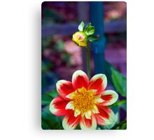 Dahlia with a hitchhiker Canvas Print